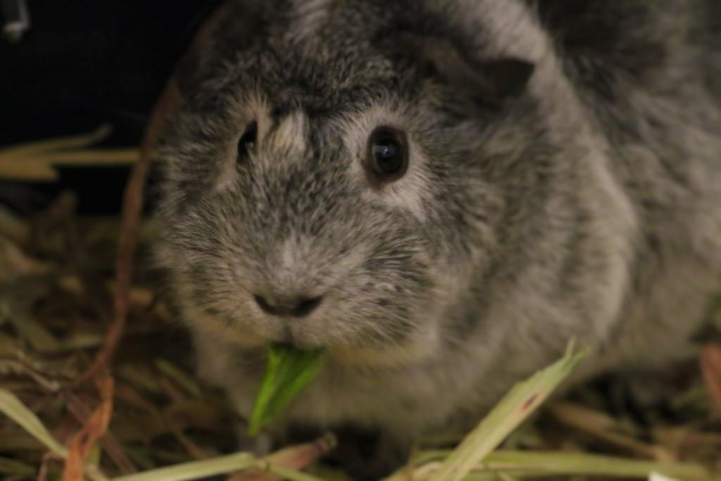 Jack enjoying his Basil
